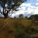 Bees on the hillside at Milkwood