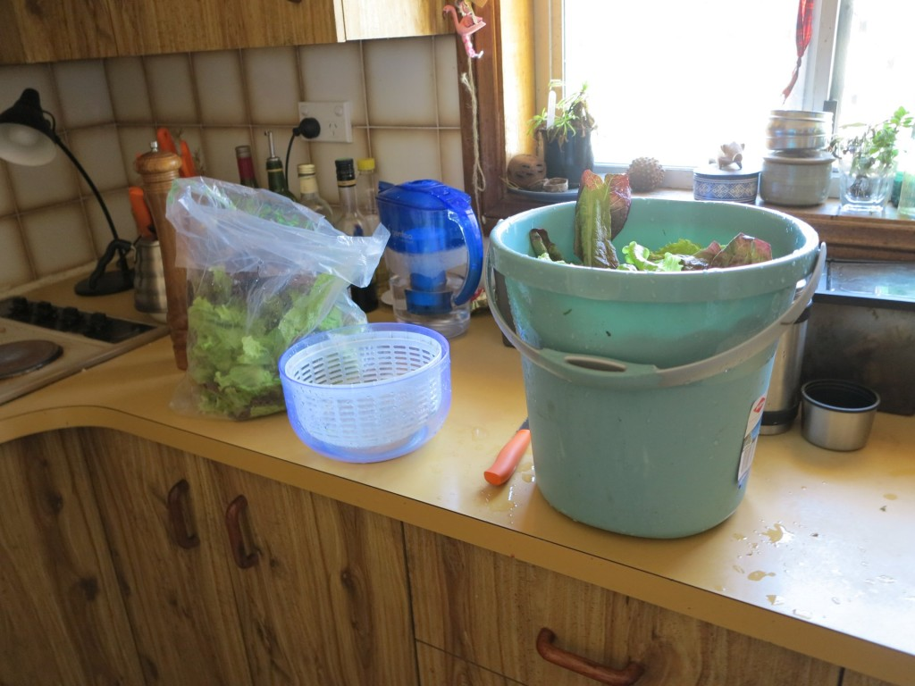 We might need a bigger salad spinner one day